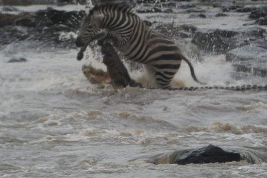 Explorer kenya safari& Beach 10 days