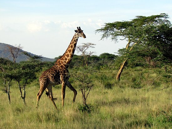 Pray Tours and Safaris