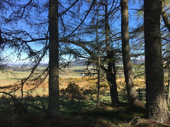 Mulloch Woods Forest Path
