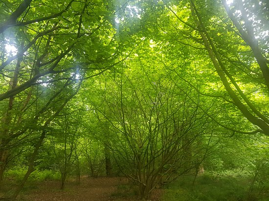 Chaddesden Wood Local Nature Reserve