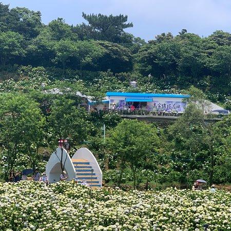 高家绣球花田水尾第二园区