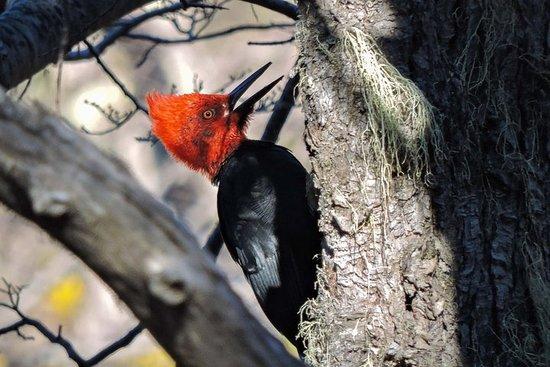 Birding Tour to Lanin Volcano Base