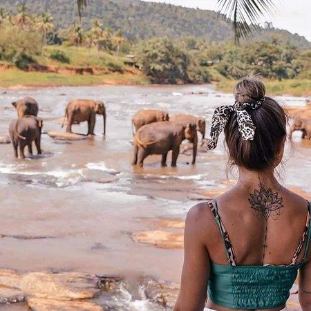 Pinnawala Elephant Orphanage  Elephant orphanage in Sri Lanka  Pinnawala Elephant Orphanageis anorphanage,nurseryandcaptive breedingground for wildAsian elephantslocated atPinnawalavillage,13km (8.1mi)northeast ofKegalletown inSabaragamuwa ProvinceofSri Lanka. Pinnawala has the largest herd of captive elephants in the world. In 2011, there were 96 elephants, including 43 males and 68 females from 3 generations, living in Pinnawala.  Quick Facts: Date opened, Location ...