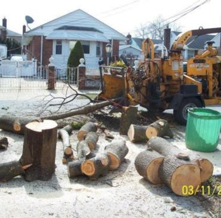 Hempstead, Nowy Jork: If you have been searching for a high quality, reputable and professional tree service company, one that is capable of handling any tree removal, tree trimming, and tree care service, then you have found the right company. At L.A. Tree service Creative Corp. we'll give you the attention and personal service you'll come to expect and enjoy.