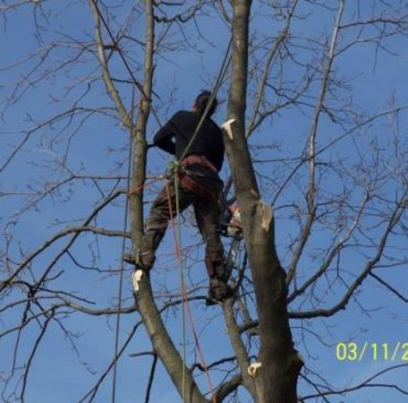 Hempstead, Nowy Jork: We provide complete tree care for residential and commercial properties. Our goal is to exceed customer expectations with reliable, safe, and cost effective tree services. The company is family owned and operated in New York with over 15 years of experience. Contact us: (917) 593-9128