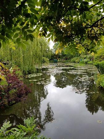 Giverny, France: モネの庭の池。 うっそうとしてる中にもなんかの安らぎを感じる感じ。