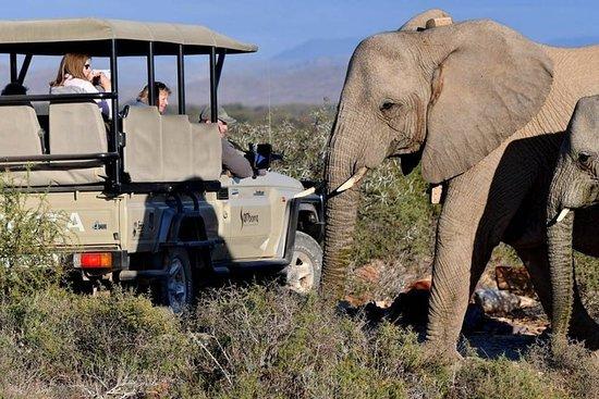 Private overføringer fra Cape Town til Sanbona Wildlife Reserve...