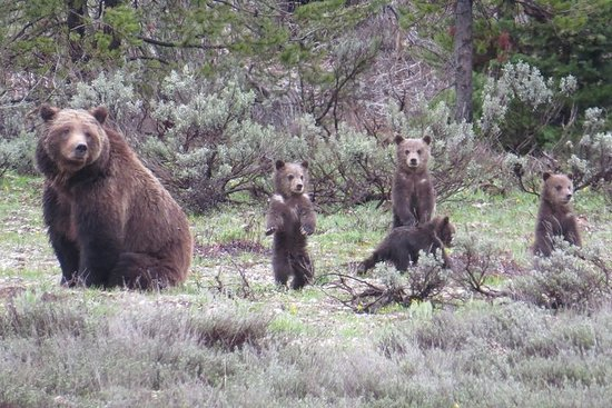 Yellowstone National Park - Full-Day...