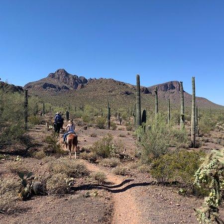 Amazing horse back thought the Saguaro