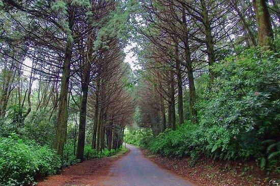 Route de la forêt prussienne
