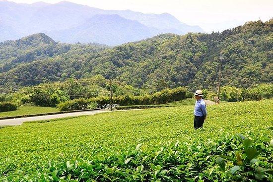 Half-Day Tea Trip in Pinglin