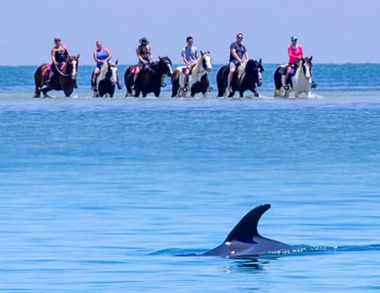 Bradenton, FL: We love when the dolphins join in.