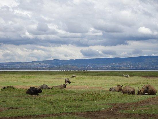 Lake Nakuru National Park, كينيا: park life