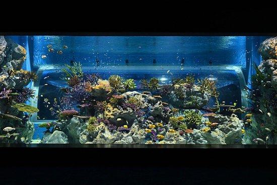 Dmm Kariyushi Aquarium