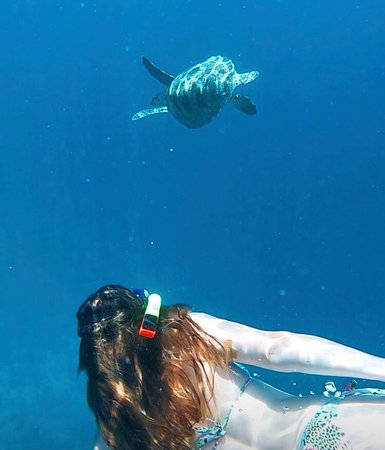 Bali Intro - 12 Day: Snorkel with turtle <3