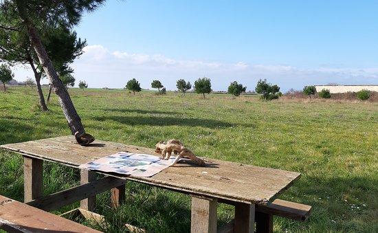 Riserva Naturale Regionale Macchiatonda