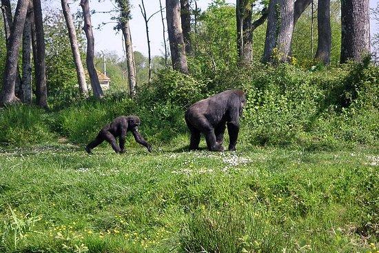 Die Öko-Safari in Gabun 6 Tage / 5...
