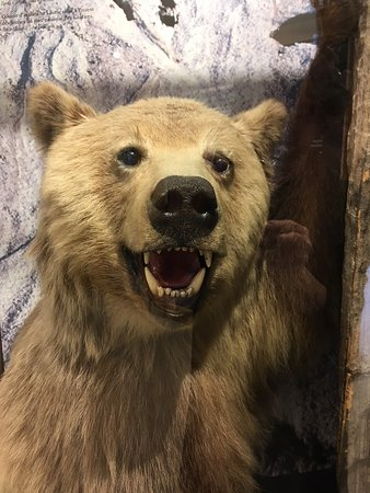 This stuffed grizzly bear cub lives in our Land of Thundering Snow exhibition. He loves being in your selfies.