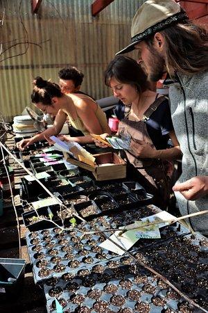 Volunteers planting seeds at PNC
