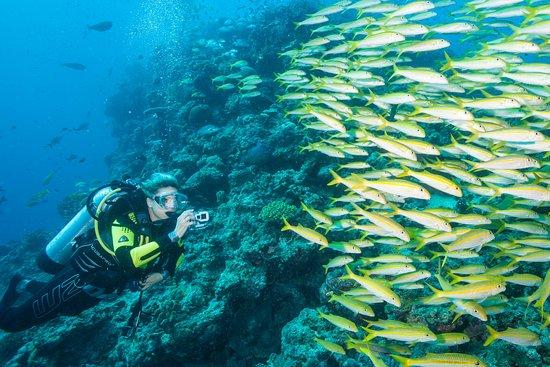 Calypso Reef Imagery Centre