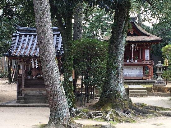 Cartolina da Nara