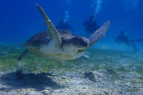 Scuba Diving Activity in Pernera