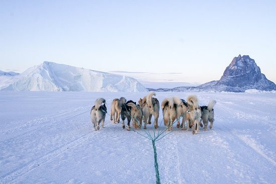 Cultural Experience And Dog Sledding