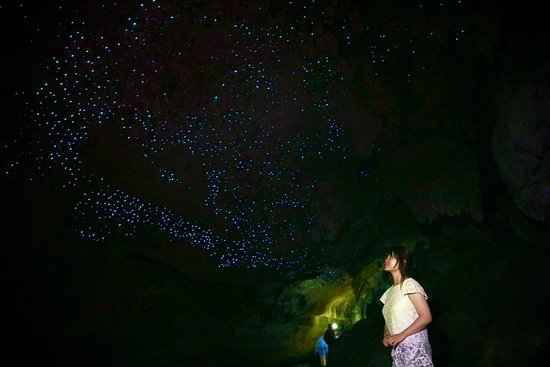Full-Day Small-Group Glowworm Exploration Tour in New Zealand