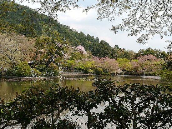 Cartolina da Kyoto