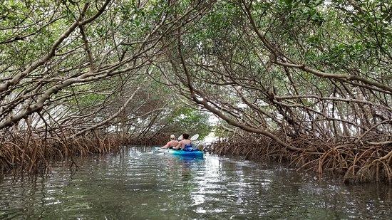 Island Kayak Tours, LLC
