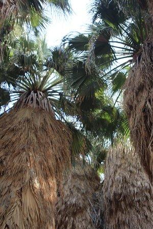 Salton City, Kalifornia: Palm trees