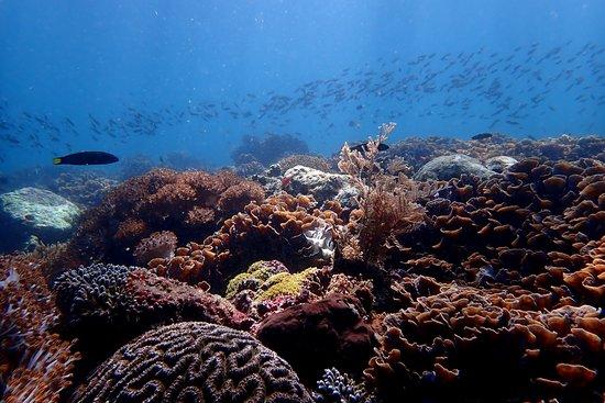 Alor Island Photo
