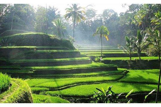 私人旅游:乌布,塔曼阿云寺和海神庙日落之旅,带酒店接送服务