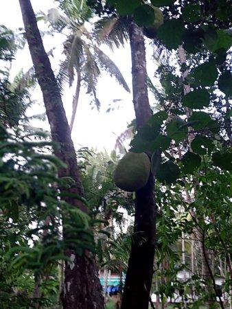 Kerala, Intia: كيرلا - الهند