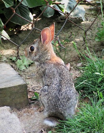 Peoria, IL: From 'Bunnyland': a Teenager. May 2020