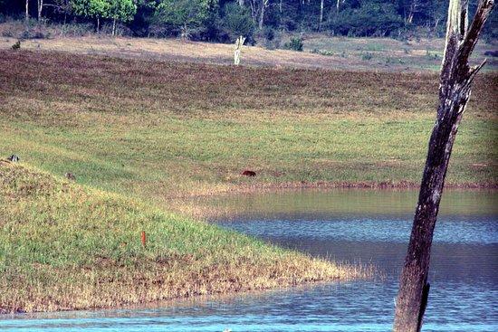 ט'קאדי, הודו: Thekkady - Periyar Natural Reserve