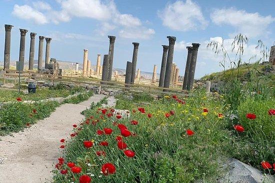 Umm Qais, Jerash & Ajloun Castle Day ...