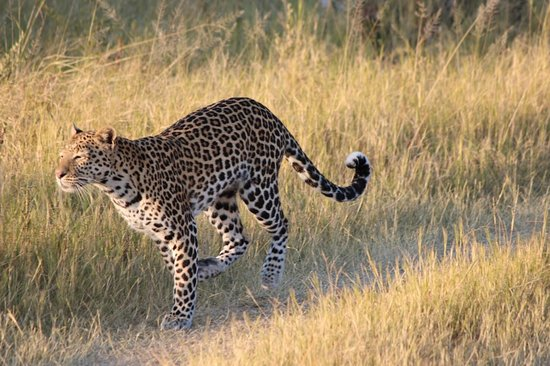 Makgadikgadi Pans National Park صورة فوتوغرافية