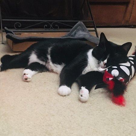США: ❤️ my kitty!!😻😻😻