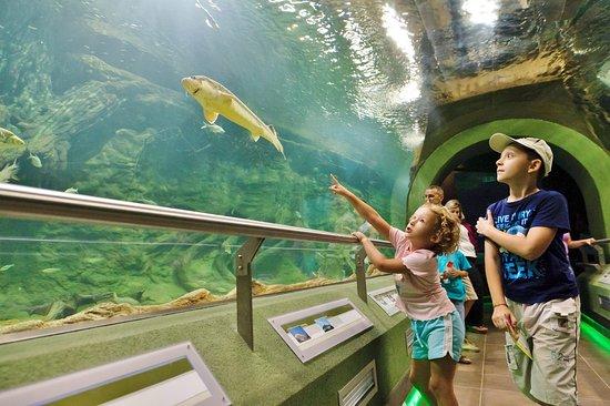 Poroszló, Magyarország: Víz alatti üvegalagút a Tisza-tavi Ökocentrum Óriásakváriumában