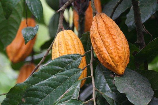 Thekkady - Kumilly Abraham's Spice Garden