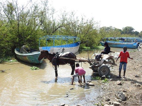 Ziway, Äthiopien: Auch die Kutsche muss gewaschen werden