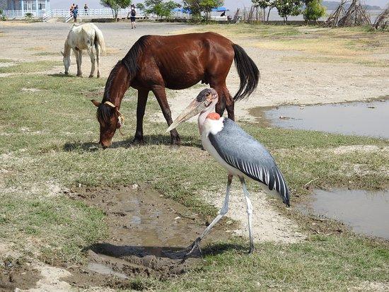 Ziway, Äthiopien: Vogel und Pferd