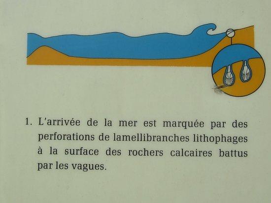 Carrière-Falunière-Musée de Channay-Sur-Lathan. Photo 45. Explications sur Ce Site Ancien de Channay- Sur-Mer.