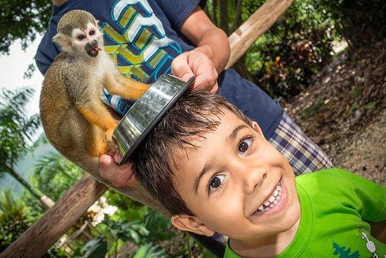 Monkeyland y Plantation Safari Tour en Punta Cana (medio día)