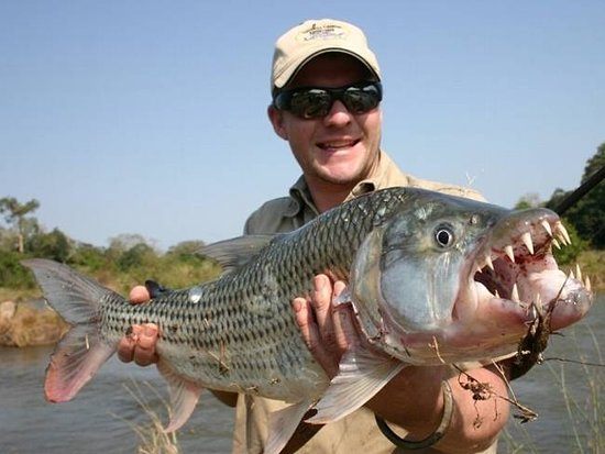 Tiger Fishing Tours