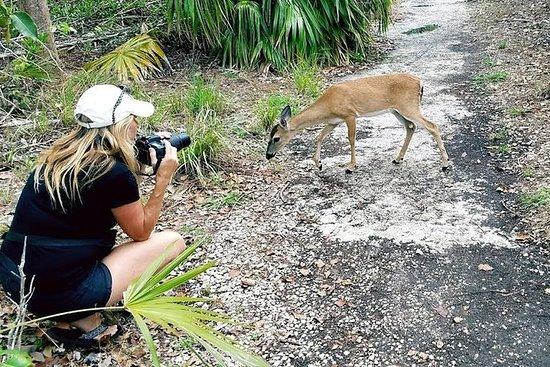 Excursion à la journée Florida Keys, rencontres de l'aquarium, depuis...