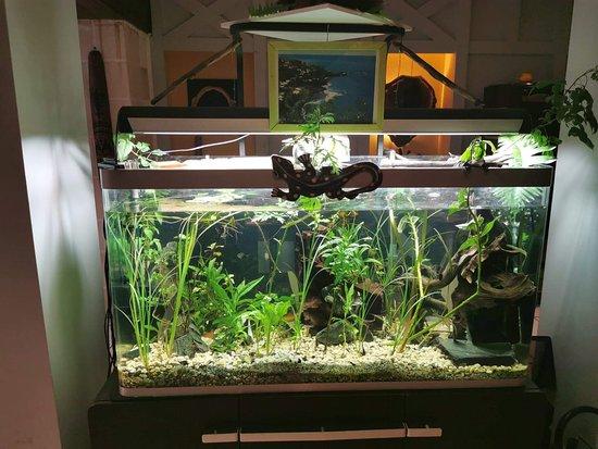 Notre aquarium