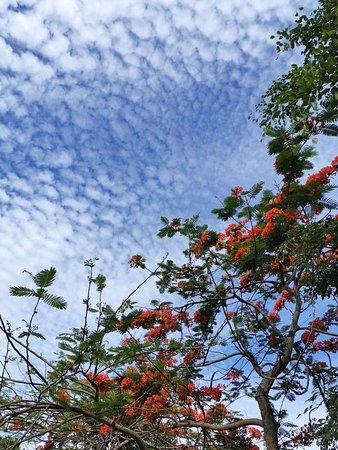 Dazu County, Kina: Yulongshan National Forest Park