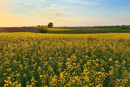 Golden Slavonia and Baranja Gourmet Tour - 6 days - Small/Private...